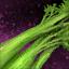 Branche de céleri