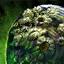 Orrian Shield