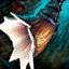 Buccin krait sentinelle