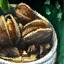 Teller mit Eisklamm-Muscheln