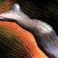 Tendon de rosseur mordrem