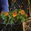 Lattice Planter with Orange Petunias
