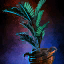 Potted Blue Moa Fern