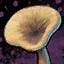 Sawgill Mushroom