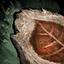 Feuille fossilisée