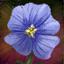 Leinblüte