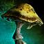 Champignon épineux compact