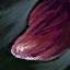 Foie de skelk