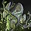 Blooming Druid Stone