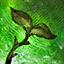Maguuma's Orchard