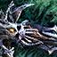Defender's Final Death