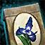 Morral de semillas de iris ascaloniano real